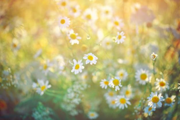 美しい野生の花。 Premium写真