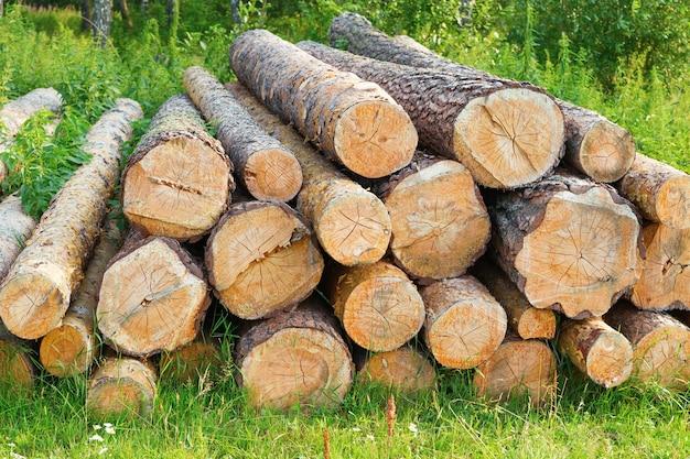 木材。森の草の上に横たわっている倒れた丸太。松の木は燃料の埋蔵量を刻んだ。 Premium写真