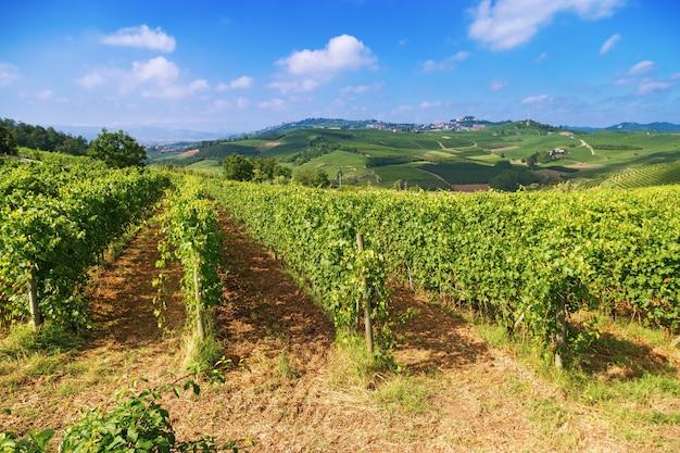 イタリアの自然の丘の上に生えているブドウの列さえ。ピードモント地方 Premium写真