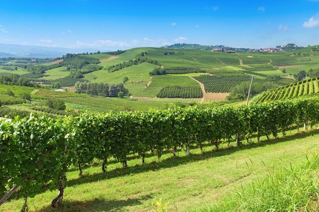 Итальянские сельхозугодья. холмистая долина региона ланге, италия, пьемонт. итальянские виноградники. Premium Фотографии