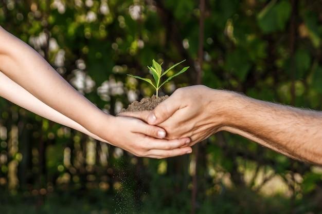 Руки мужчины и ребенка, проведение молодых растений против зеленого природного весной Premium Фотографии