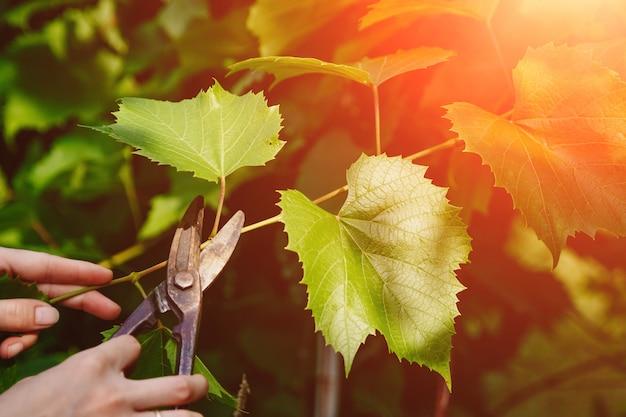 Садовые ножницы отрезаны от сада, крупный план ножниц Premium Фотографии