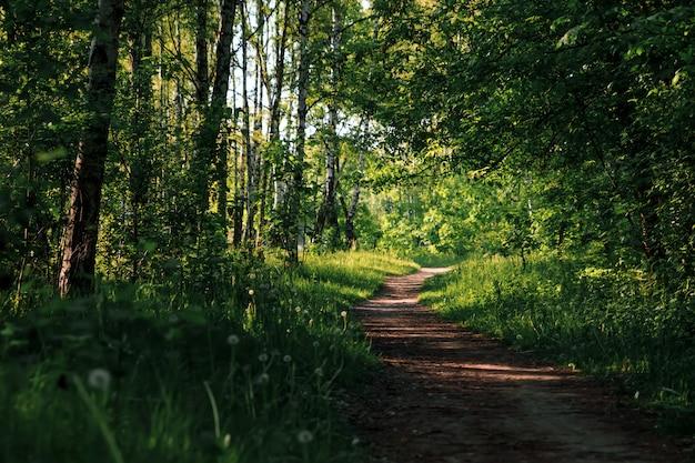緑のトンネル竹本物の自然、緑の森。 Premium写真