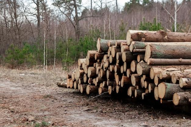 伐採、森の中で地面に横たわっているたくさんの丸太 Premium写真