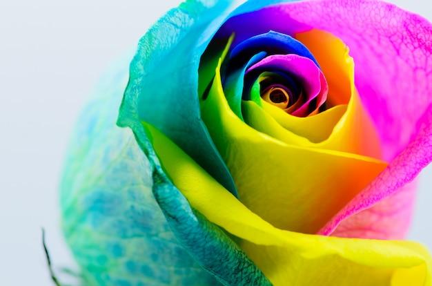 白地に美しい色とりどりのバラ Premium写真