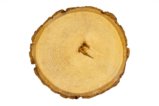 木の切り株、ラウンド木のシラカバ、白い背景で隔離の切り取り Premium写真