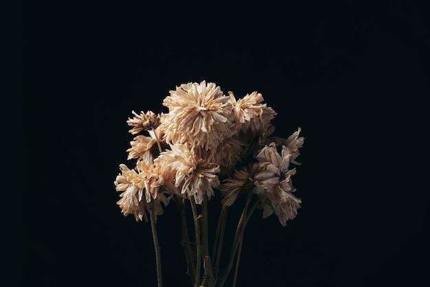 暗闇で死んだ美しい花 Premium写真