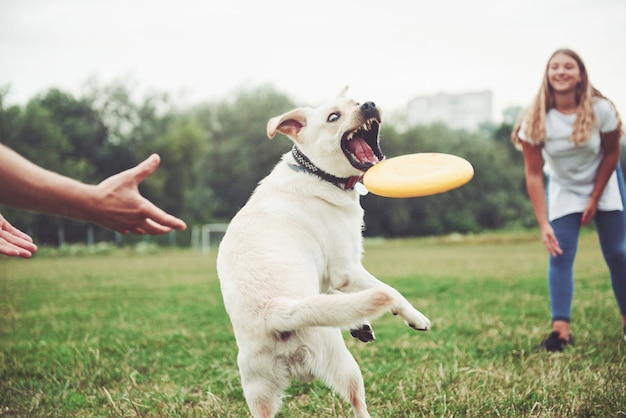 公園で愛犬と遊ぶ美少女。 無料写真