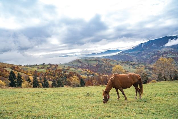 Красивый грациозный жеребец гуляет по зеленому полю и ест сочную свежую траву на фоне прекрасной природы карпатских гор. Premium Фотографии