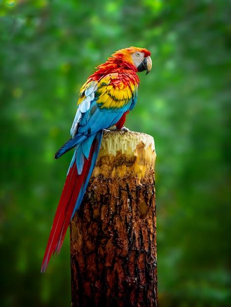 Красивый попугай ара сидит на ветке Premium Фотографии