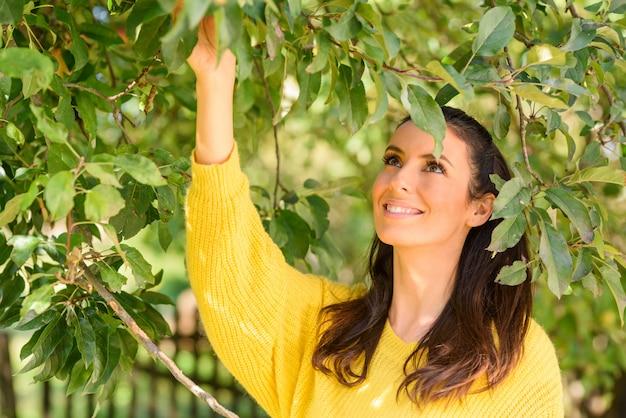 秋の木からリンゴを収穫する美しい女性 Premium写真