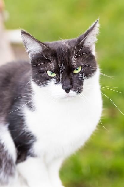 公園に座っているソフトフォーカスの黒と白の猫 無料写真