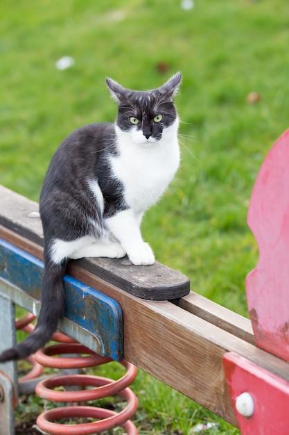 遊び場のシーソーに座っている黒と白の猫 無料写真