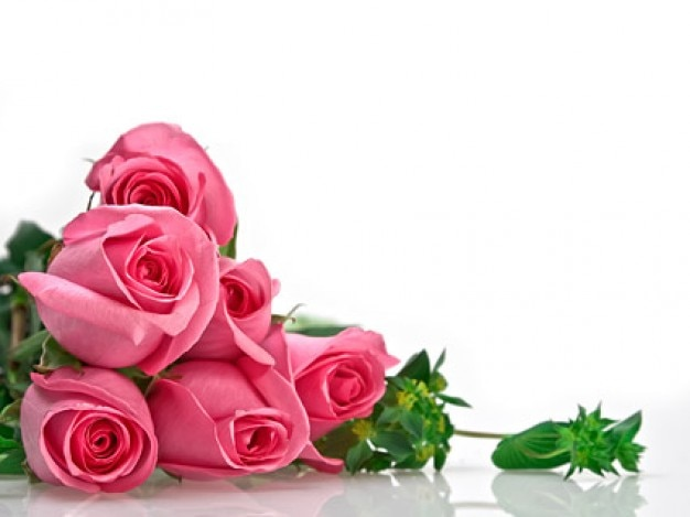 a bouquet of pink roses picture material Free Photo
