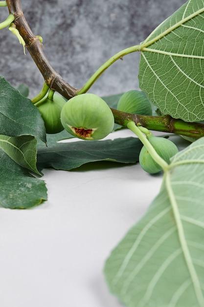 大理石の葉を持つ緑のイチジクの枝。 無料写真