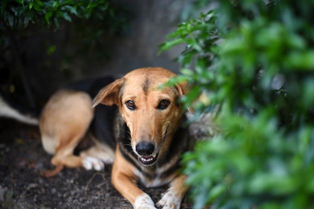 Коричнево-черная собака отдыхает под зеленым кустом в солнечный жаркий день. Premium Фотографии