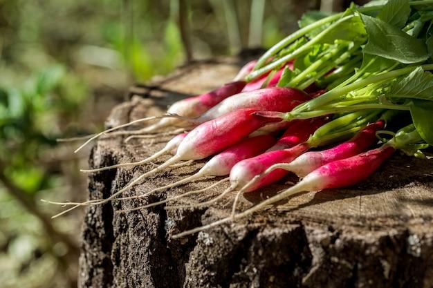 木の切り株に新鮮な大根の束 Premium写真