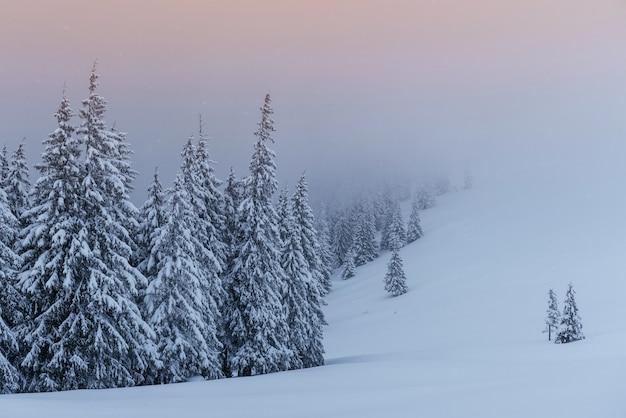 穏やかな冬景色。雪に覆われたもみが霧の中に立つ。森の端にある美しい景色。 無料写真