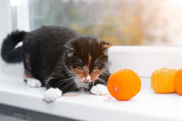 猫は糸の玉で遊ぶ。ペットゲーム。編み物用の糸 Premium写真