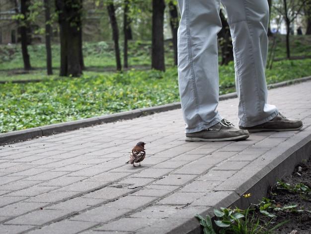 Крупный план маленькая птичка и мужчина. Premium Фотографии