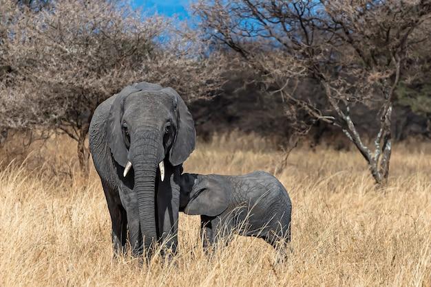 Слоненок кормит ребенка крупным планом Бесплатные Фотографии
