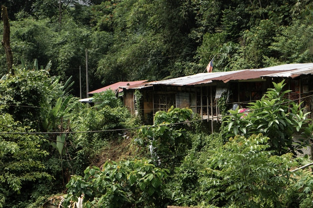 Ветхий дом посреди джунглей. тишина и одиночество. рай для социальной тревожности. Premium Фотографии