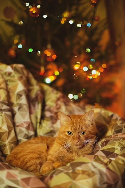 クリスマスの装飾が施された居心地の良いソファでくつろぐ飼い猫 無料写真