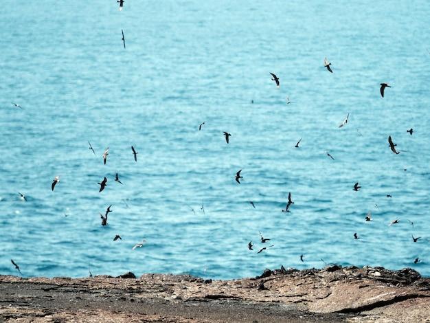 エクアドルのガラパゴス諸島で飛んでいるガラパゴスミズナギドリの群れ 無料写真