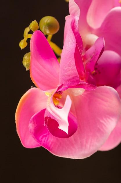 Вид спереди розовый цветок красивый живой природа цветы цвет Бесплатные Фотографии