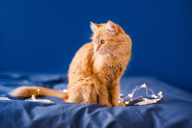 生姜のふわふわ猫がベッドに座って、クリスマスの花輪で青い背景を洗います。 Premium写真