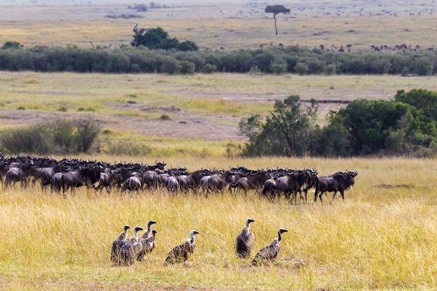Группа стервятников на фоне стада антилоп гну кения африка Premium Фотографии
