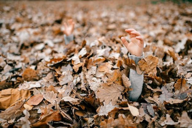 葉の子の手 Premium写真