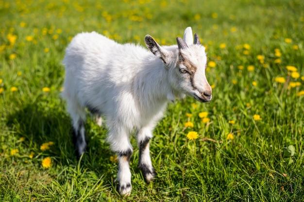 春に咲く草原で子供が一人で立っています Premium写真