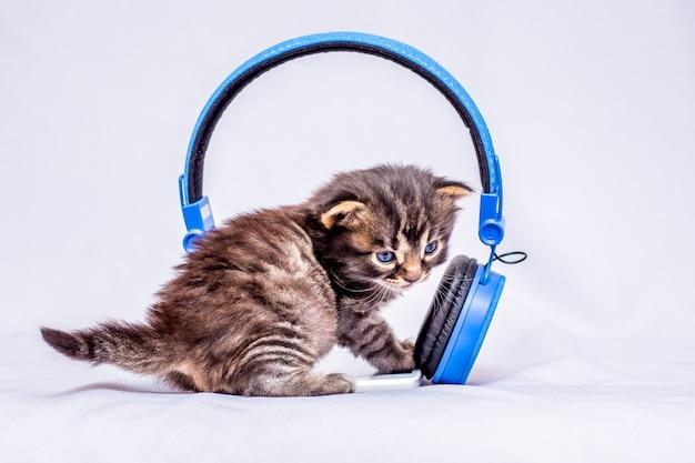 Маленький котенок слушает звуки музыки возле наушников. наушники для прослушивания любимой музыки Premium Фотографии