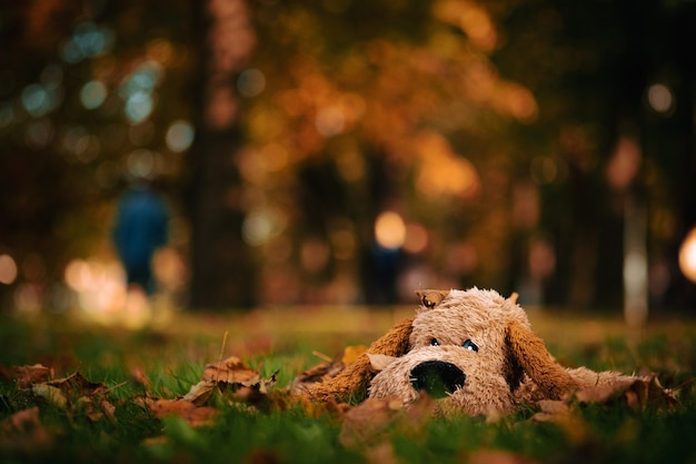 黄色の木々と美しい秋の風景の中の孤独なおもちゃの犬 Premium写真