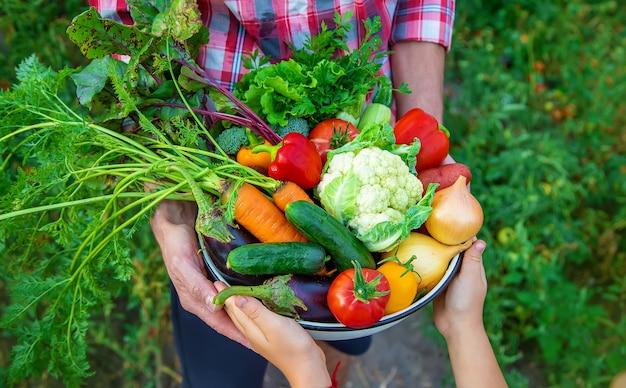 農夫と子供が野菜の収穫を手にしています。セレクティブフォーカス。自然。 Premium写真