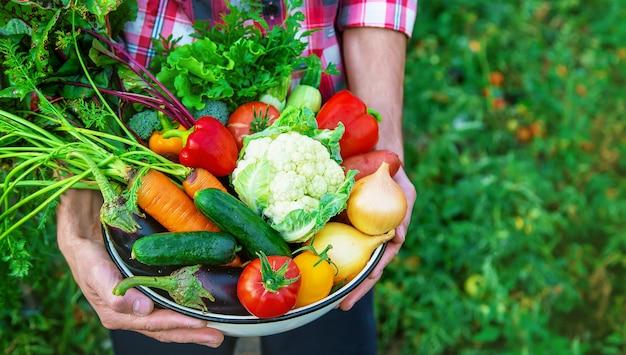 ある農夫が野菜の収穫を手にしています。セレクティブフォーカス。自然。 Premium写真