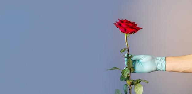 Рука мужчины в синей защитной перчатке держит и дарит красную розу Premium Фотографии