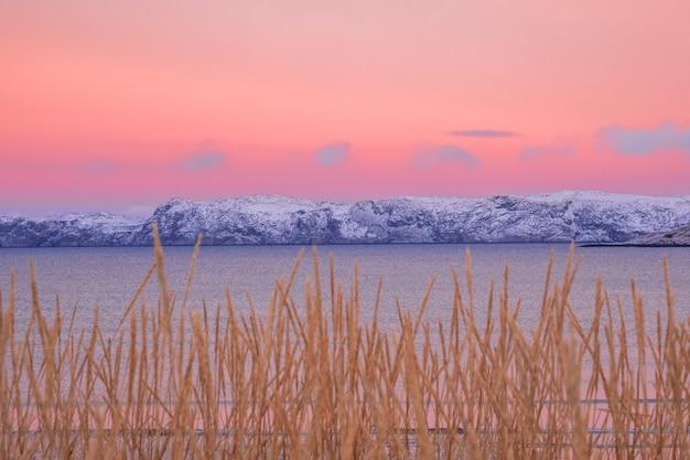 수평선에 북극 언덕이 있고 밝은 분홍색 하늘을 배경으로 희미한 식물이있는 최소한의 북부 풍경입니다. 프리미엄 사진