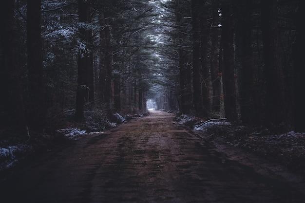 Узкая грязная дорога в темном лесу Бесплатные Фотографии