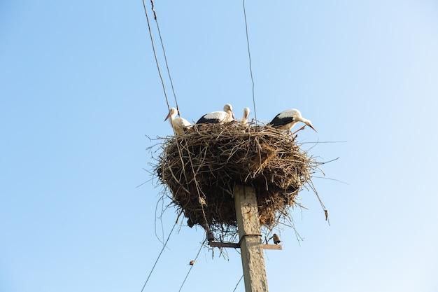 Гнездо с аистами на опоре лэп в деревне. Premium Фотографии