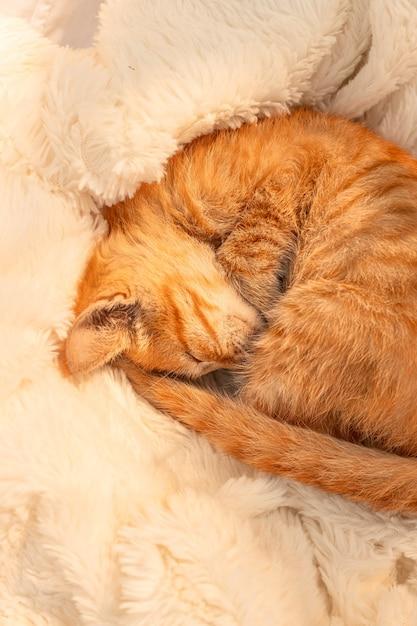 小さな生姜の子猫が居間のソファーの柔らかい毛布の上で眠ります。 Premium写真