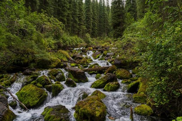 Маленькая речка в лесу летом Premium Фотографии