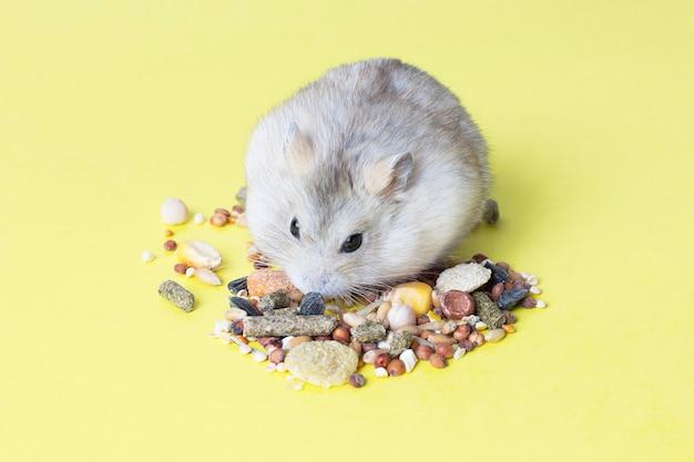 Маленький полосатый хомячок ест сухой корм на желтом фоне Premium Фотографии
