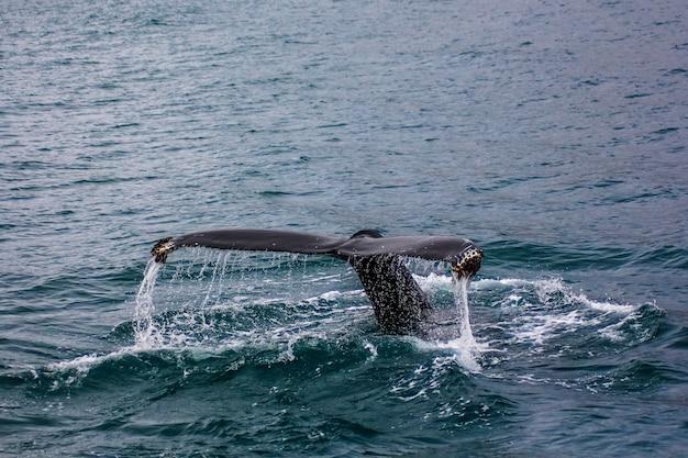 水中の大きな魚の尻尾 無料写真