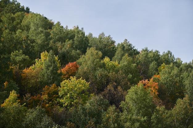 Вид сверху на красочные лесные деревья и озеро в осенний сезон. Premium Фотографии