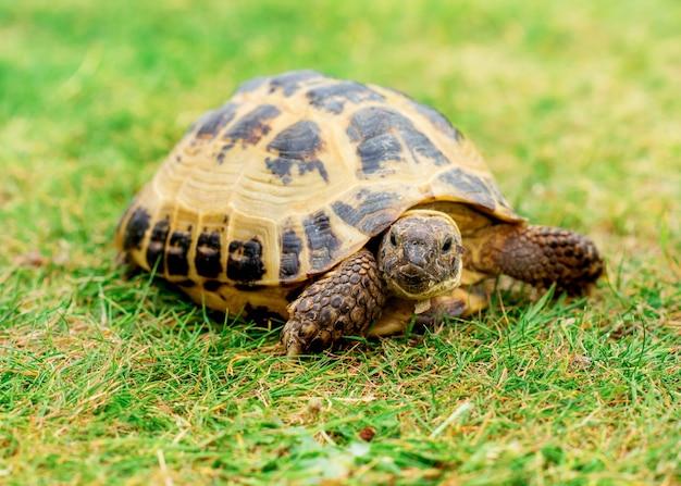 Черепаха на траве днем Premium Фотографии