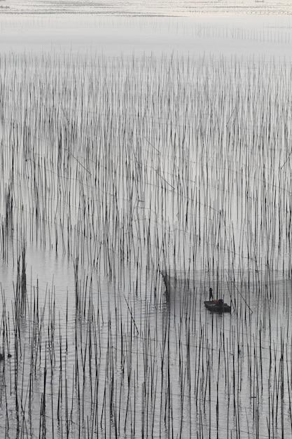 Вертикальный снимок озера с высокими растениями Бесплатные Фотографии