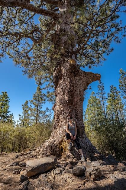 テイデ山の森をトレッキングする木の中の若い女性 Premium写真