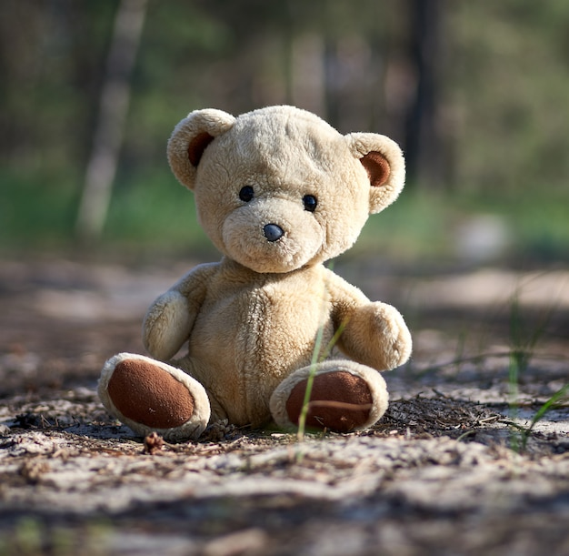 Abandoned brown teddy bear sitting in the middle of the forest in the evening Premium Photo